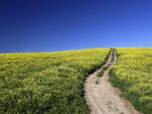 Allergien werden durch Pollen, Staub, Milben und bestimmte Lebensmittel ausgelöst