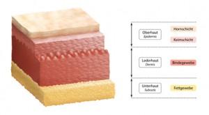 Der Dermatologe unterscheidet verschiedene Hautschichten