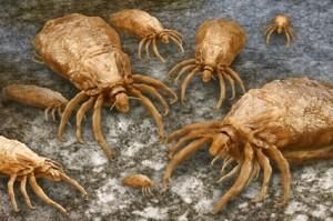 Bei Läusen handelt es sich um Parasiten und müssen vom Dermatologen behandelt werden